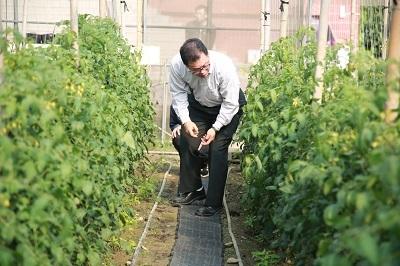 遠東科大通識中心主任詹添印到溫室進行番茄首摘