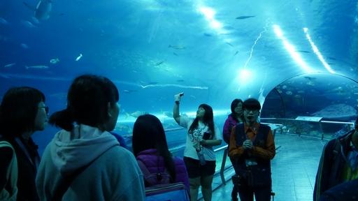 正修科大磨課師學員與魟魚、鯊魚共宿新奇體驗令人難忘。