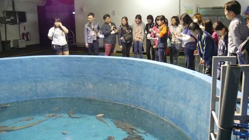 正修科大磨課師學員海生館觀賞海洋生態。