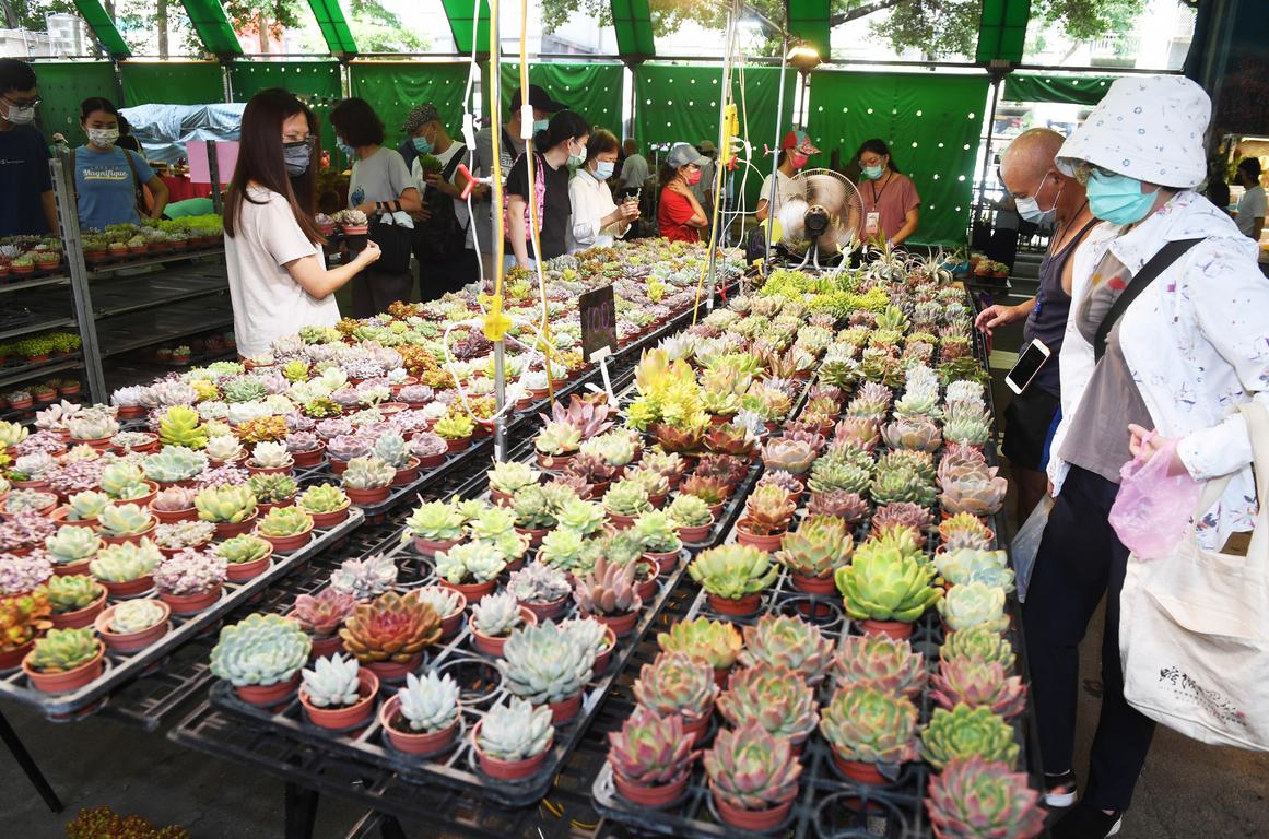 Flower market reopens