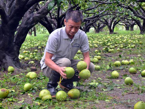 A pomelo farmer in Taitung County.