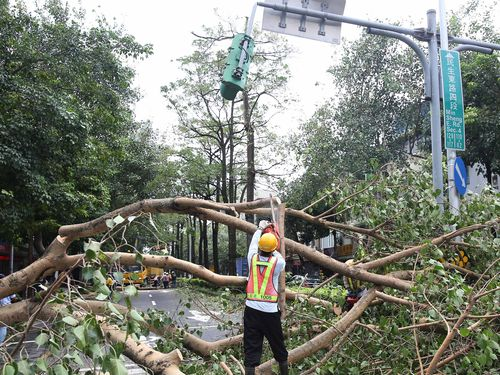 A city worker removes falling trees in Taipei after Typhoon Soudelor.