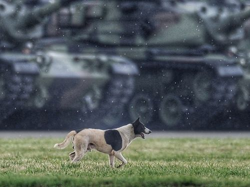 A dog is seen in a military base in Hsinchu during an arms display in 2015. (CNA file photo)