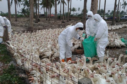Photo courtesy of Kaohsiung City Animal Protection Office