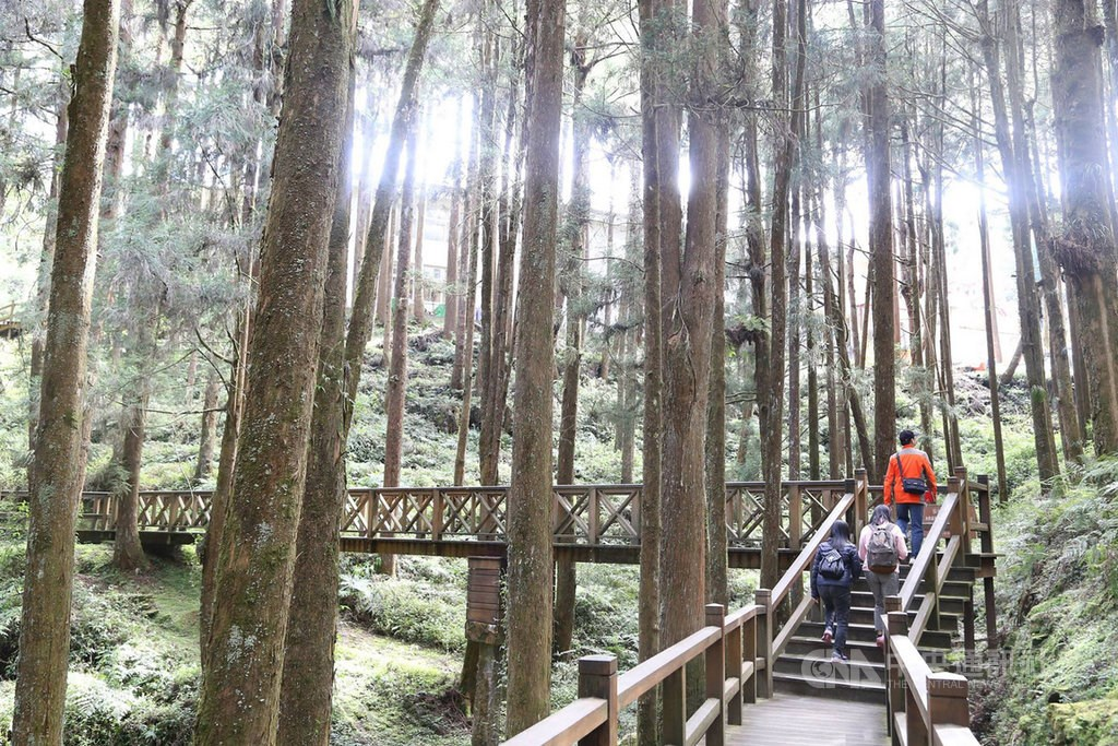 A trail in Alishan Forest Recreational Area/ CNA photo June 24, 2020