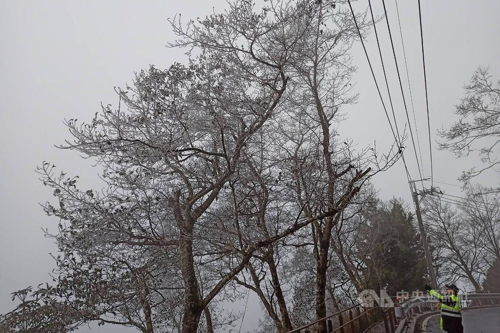Rime ice was seen on trees in Taipingshan National Forest Recreation Area. Photo courtesy of Luodong Forest District Office.