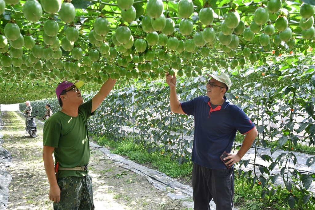 Photo courtesy of the Kaohsiung District Agricultural Improvement Station