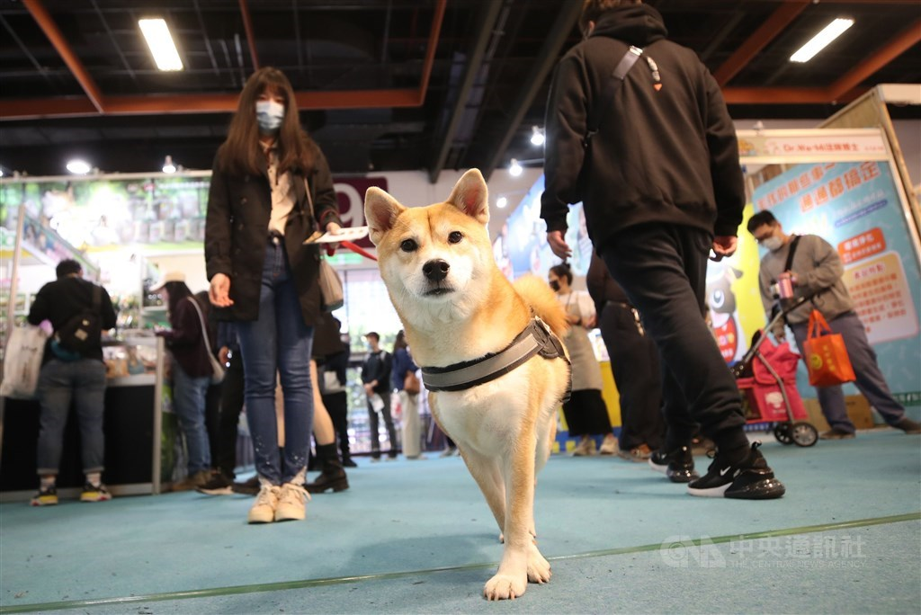 A dog is pictured at a recent consumer fair held for pet owners. CNA file photo