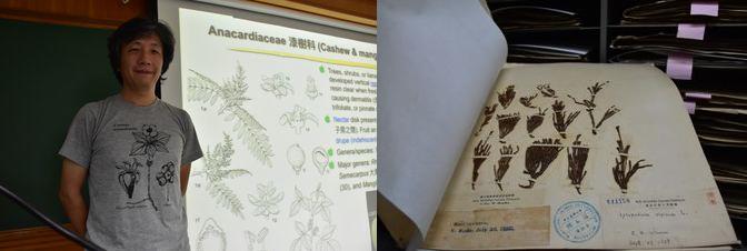 植物博物館館長胡鐵章教授(左)。 標本由第一任導演工藤裕順(右)收集。 日本統治時期的導演包括日野伸一(Shinichi Hibino)(1933)和正宗正孝(Masataka Masamune)(1940-43)。