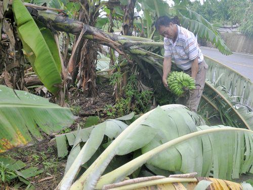 台風7号で2人死亡123人負傷  農業被害総額8億3000万円超