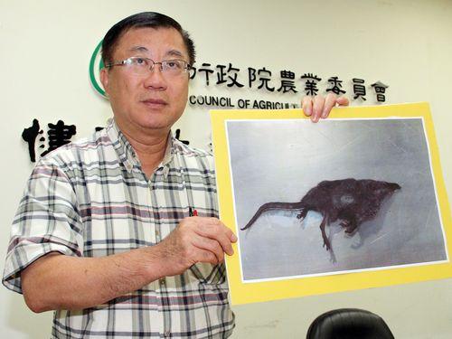 台湾・台東、ジャコウネズミの狂犬病感染を確認  世界初か