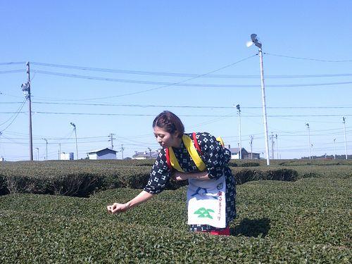 日本からの輸入食品、非被曝証明提出の対象拡大へ  お茶なども/台湾