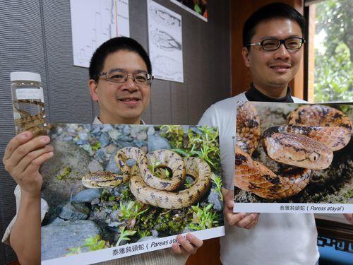 台湾固有の新種のヘビを発見した林思民副教授(左)と游崇イさん