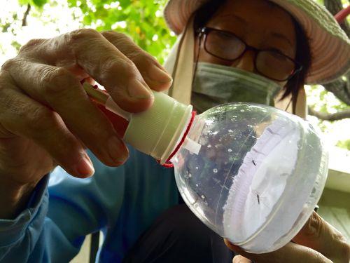 デング熱感染者数7000人突破  台南で1日に500人以上増加/台湾
