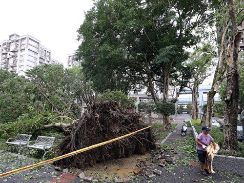 台風21号、台湾全土で2人死亡300人以上けが