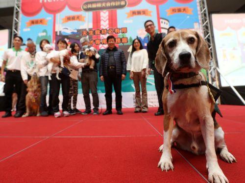 台北市、野良犬に新たな役割付与  「公共サービス犬」導入へ/台湾