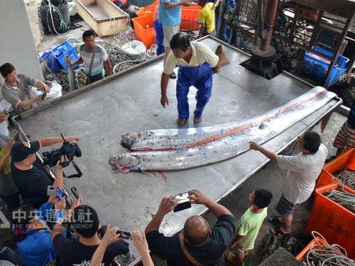 """地震頻発の台湾東部  """"地震魚""""2匹が漁網の中に"""