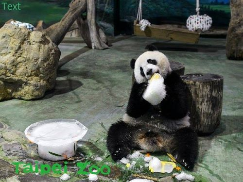 台北市立動物園提供