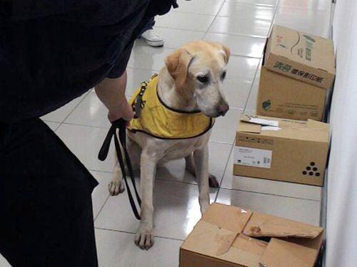 麻薬の取締件数増加、探知犬が大活躍/台湾