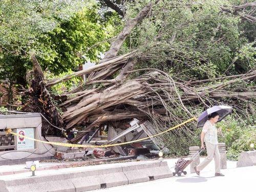 台風9号  台湾全土で103人けが  最大54万戸強停電