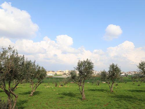シリア難民向け仮設住宅の建設予定地