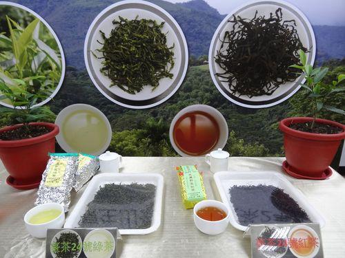 緑茶(左)と紅茶(右)への加工が可能な「台茶24号」