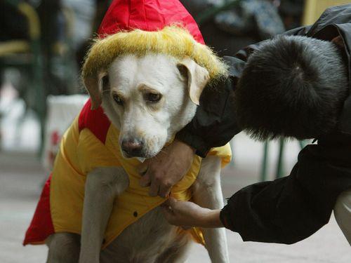 ペットの防寒対策もばっちり!