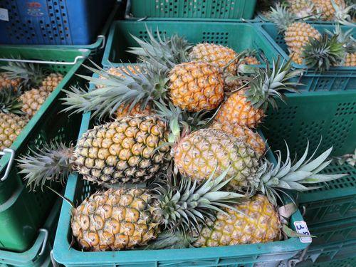 旬の嘉義産パイナップル、日本へ