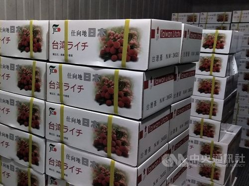 台湾産ライチの夏季対日輸出、コロナ禍でも成長=動植物防疫検疫局提供