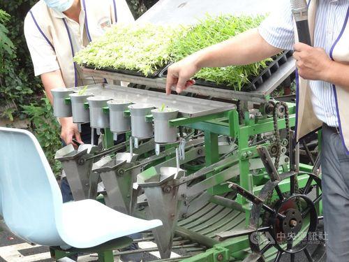 桃園区農業改良場が開発した野菜移植機