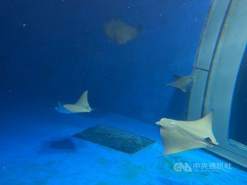横浜八景島運営の水族館「Xpark」、動物虐待を否定=ネットで疑惑の声(資料写真)