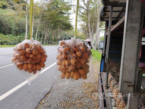 台湾一早いビワが収穫期 生産者、週末3連休の客足に期待