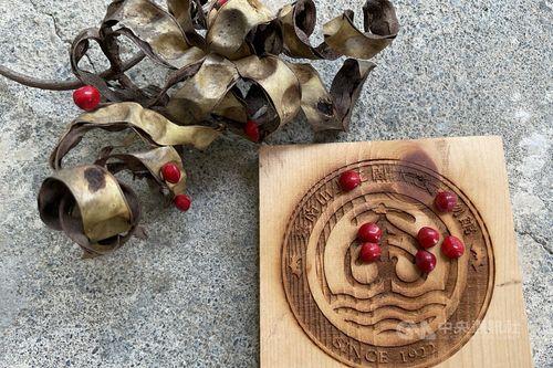 ナンバンアカアズキの種子=台南市文化局提供