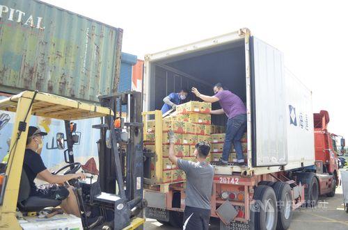 台湾・嘉義産パイナップル、6.7トンが沖縄へ出荷