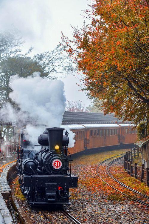 阿里山鉄道、紅葉狩り特別列車運行へ SLがヒノキ製客車けん引=写真は2020年撮影、黄源明さん提供