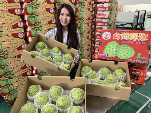 台東県の特産フルーツ、アテモヤが旬 旧正月の贈答品に最適