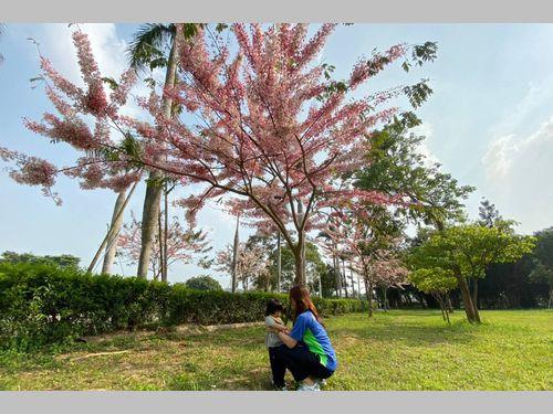 熱帯の花、美しく開花 日本統治時代の水道施設を前身とする博物館