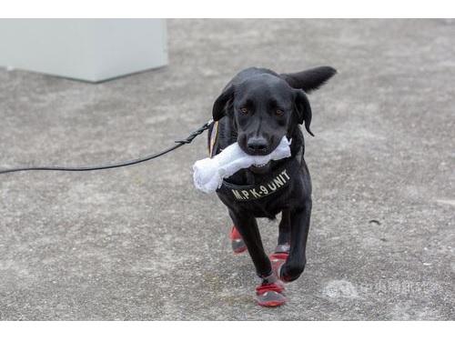麻薬探知犬の足に赤い靴「証拠破損防ぐため」