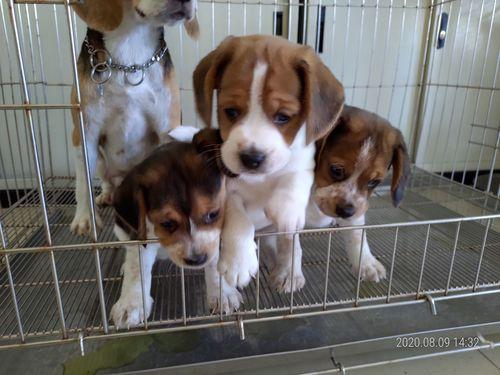 離島・澎湖で警察犬のたまご3頭誕生 晴れたらいいね!