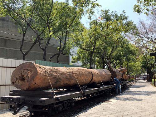 嘉義製材所で展示のタイワンベニヒノキ、台湾の林業史物語る