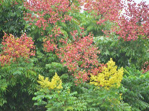 秋限定の詩的風景をどうぞ