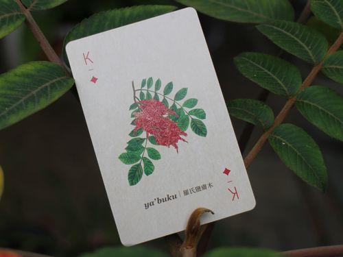 おしゃれなトランプ! 先住民の有用植物を紹介