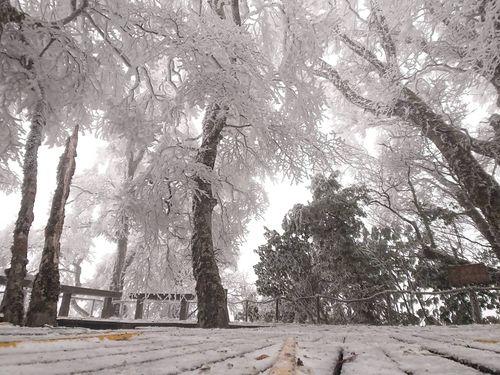 宜蘭県山間部の景勝地で初雪 幻想的な銀世界に