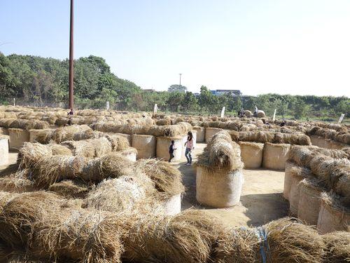 挑戦しよう 中部・雲林県で稲わらロールの大型迷路