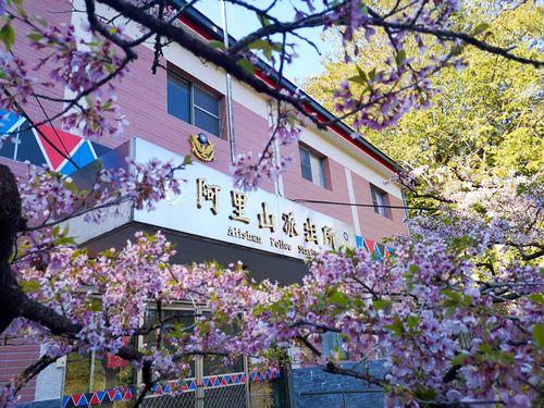 台湾にいながら日本情緒堪能 蒸気機関車に乗って楽しむ阿里山のお花見
