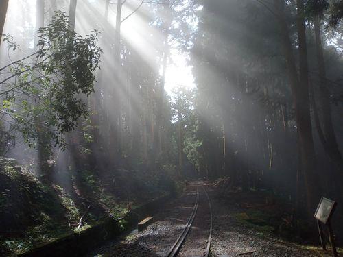 阿里山鉄道の支線「水山線」を前身とする遊歩道 8カ月ぶりに通行再開