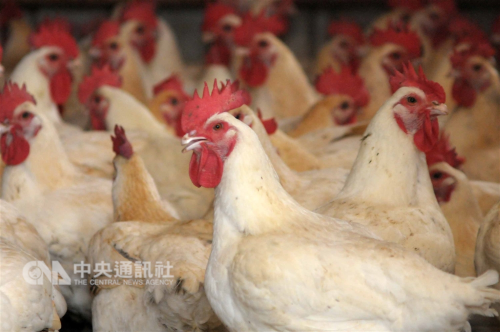 Antibodies found that can be developed into H7N9 drug: researchers