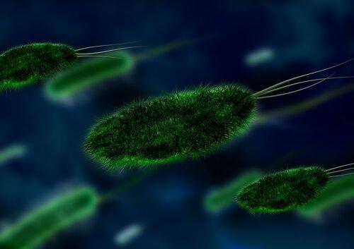 CDC warns public to practice good hygiene during norovirus peak season