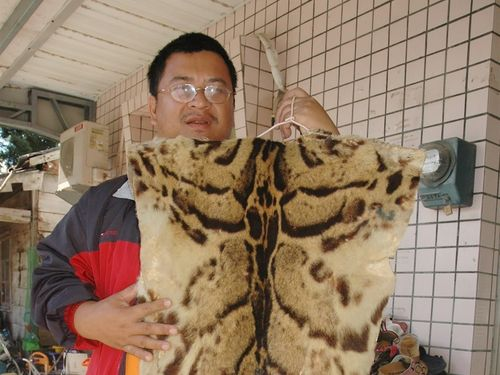 Extinct or not, leopard a shared memory for indigenous peoples