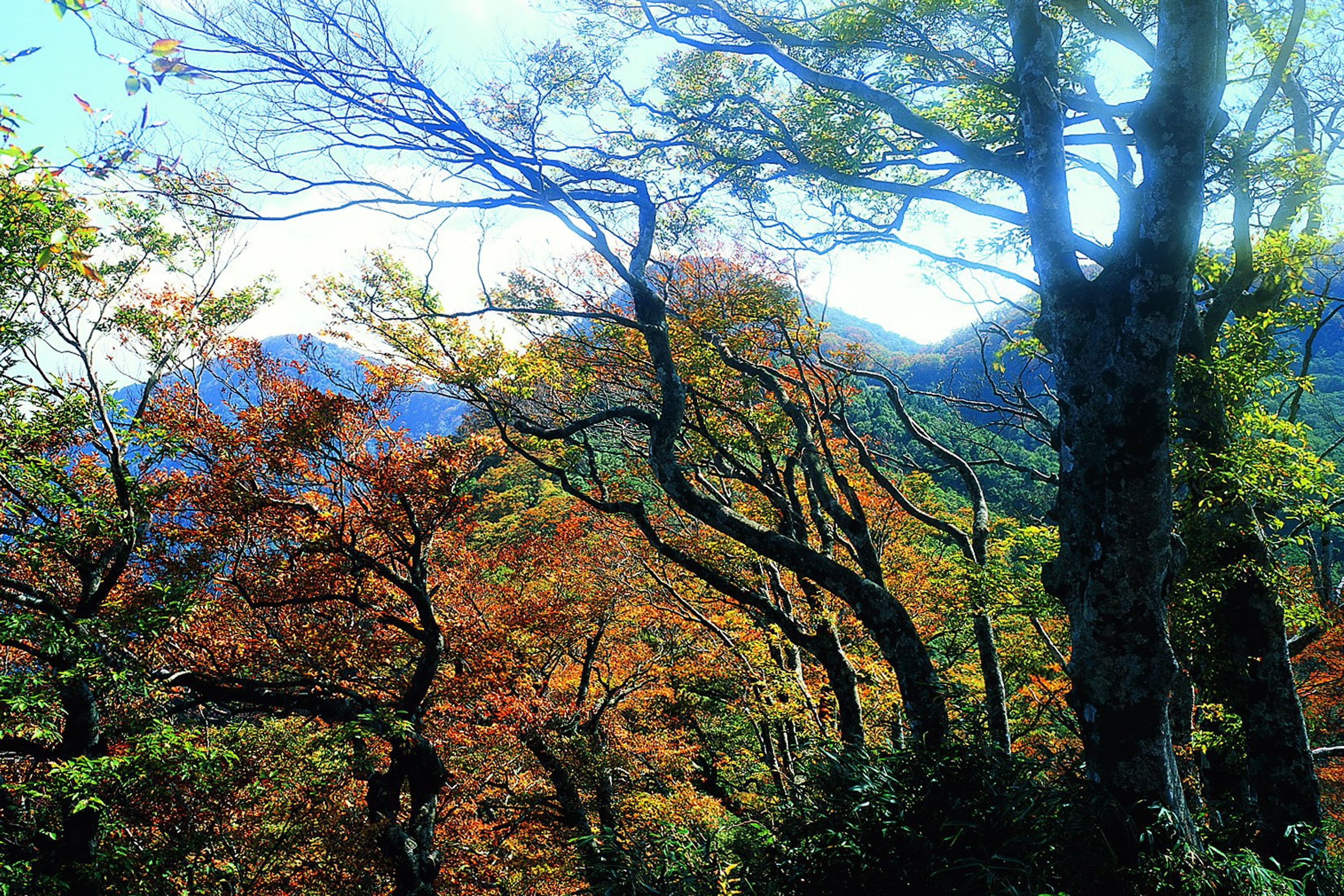 (Taipingshan; photo courtesy of the Forestry Bureau)